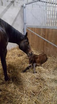 Bientôt de nouvelles naissances à Barenton, Mortain, Flers, Vire
