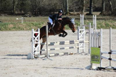 Travail du cheval Barenton